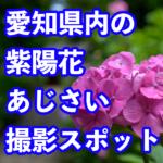 愛知県内の紫陽花撮影スポット